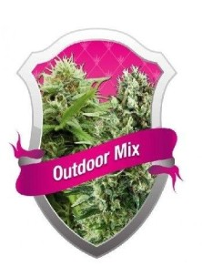 Royal Queen Outdoor Mix Auto (5 Semillas)