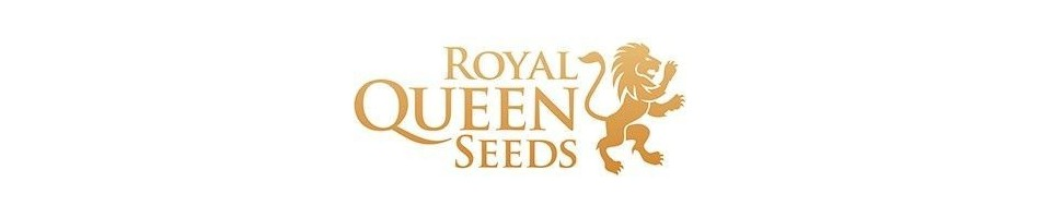 Royal Queen Seeds Feminizadas | Semillas de marihuana feminizadas - Royal Queen Seeds | semillas de marihuana en oferta
